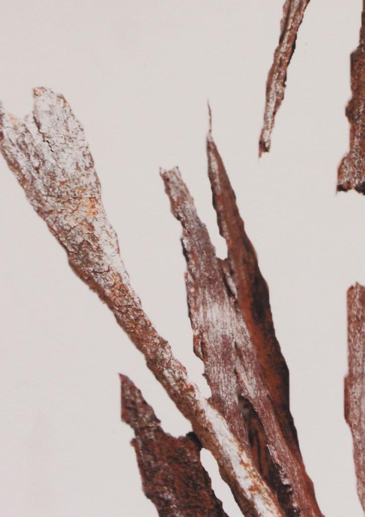 estigmas y cicatrices XVIII